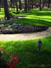 Контрастное-цветовое-решение-сада